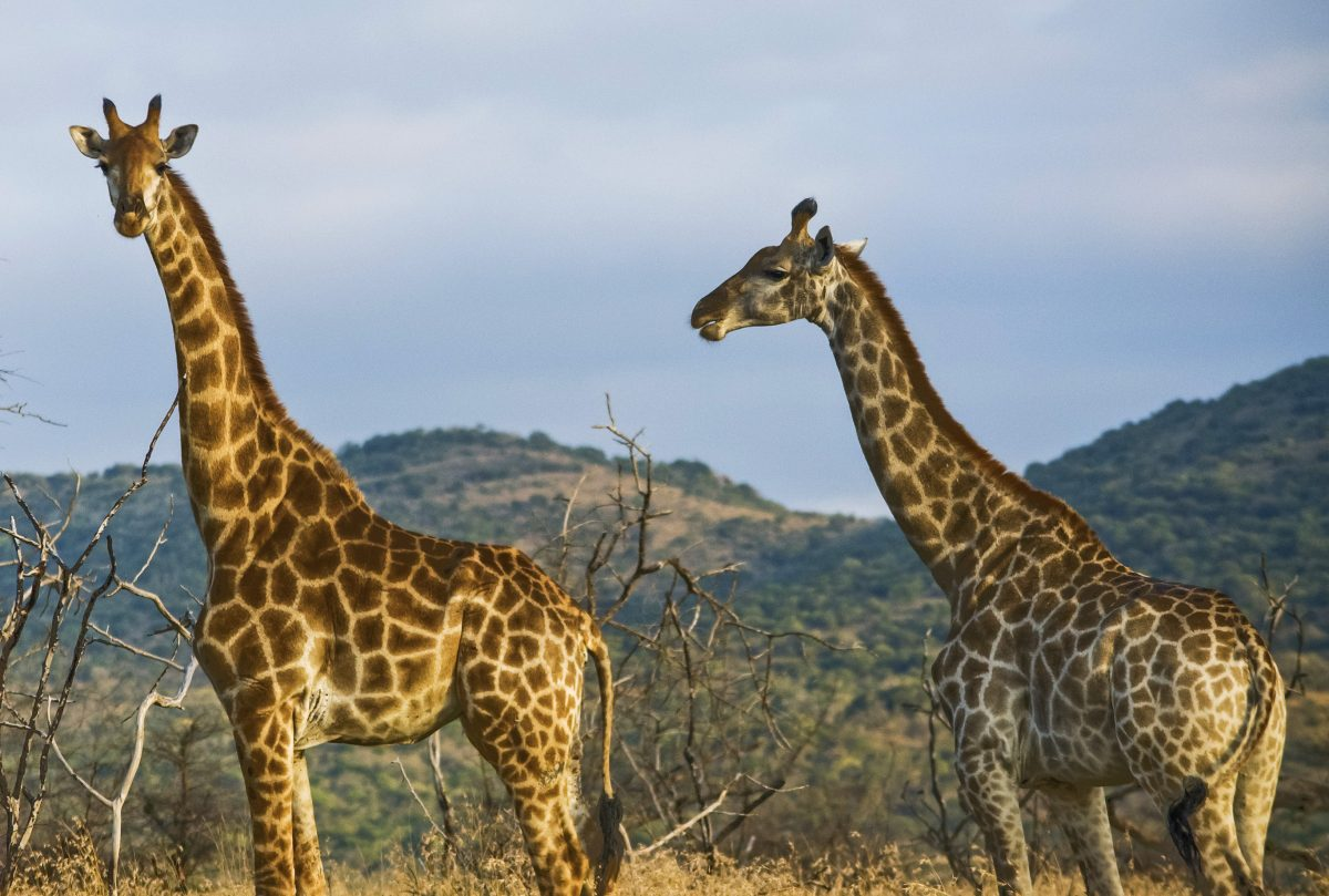 Choose an ethical safari, have the best two days of your animal-loving life