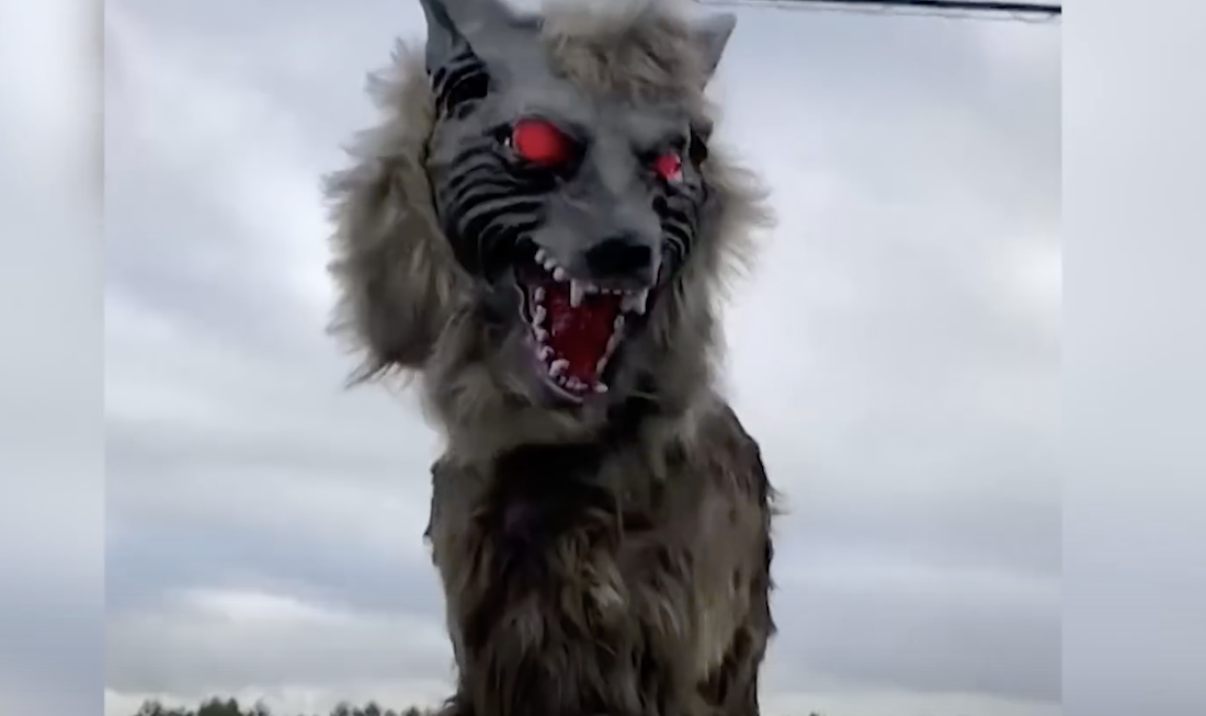 Japanese Town Employs Robot Wolves to Frighten Away Wild Bears