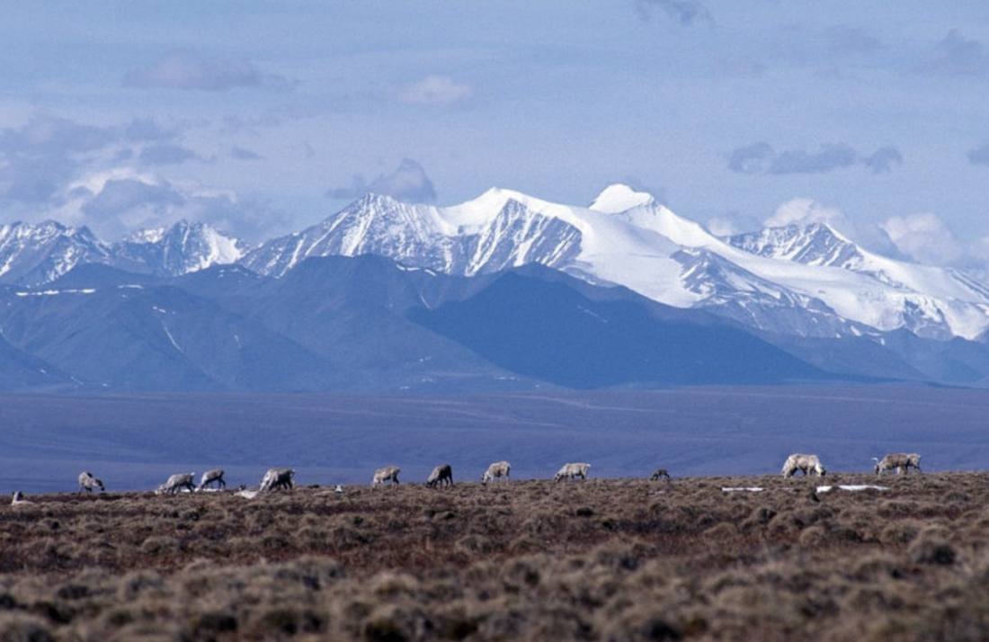 Trump's Plan To Sell Off ANWR Oil Leases Was Huge Bust
