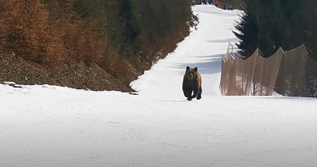 The Romanian Bears Are Chasing Skiers Again