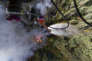 After a Wildfire Deciduous Trees Can Move In, Slowing Future Fires