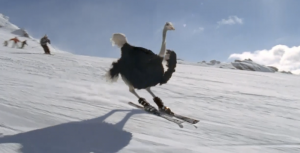 Giving 'Snowbirds' a Whole New Meaning